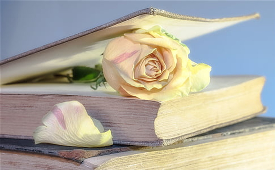 rose-book-old-book-blossom-thumb.jpg